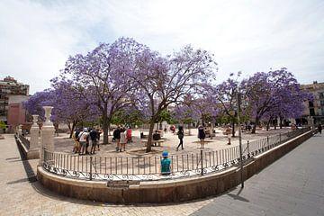 Plein in Malaga met paarse bomen van Kees van Dun
