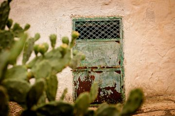 Oude deur en een cactus