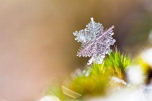 Winter sneeuwvlokje
