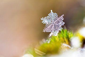 Winter sneeuwvlokje van Dennis van de Water