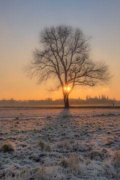 Zonsopkomst bij boom alone in besneeuwd landschap van Moetwil en van Dijk - Fotografie