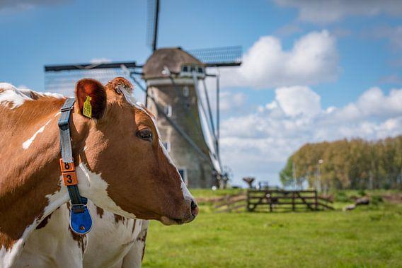 Koeien en een molen in de Vlist in de buurt van Gouda
