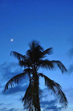Zie de maan schijnt door de palmboom van Myrthe Visser-Wind