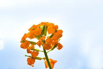Fel oranje kleurende bloementjes van J..M de Jong-Jansen
