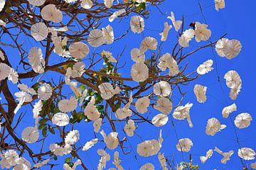 Bloemdecoratie Funchal Madeira van Rob Walburg