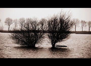 Hoog Water van Harold Wilke