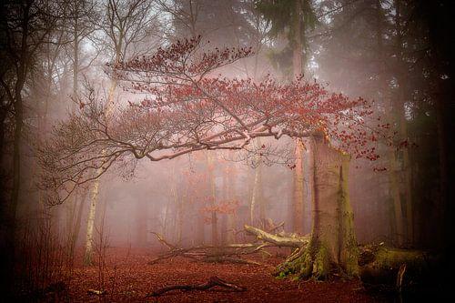 Herfst van