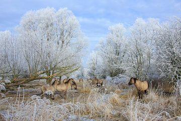 Konikpaarden in winters landschap - Natuurlijk Wadden van Anja Brouwer Fotografie