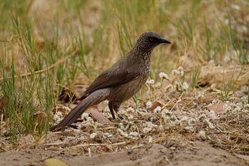 Vogel in het wildpark van Erna Haarsma-Hoogterp
