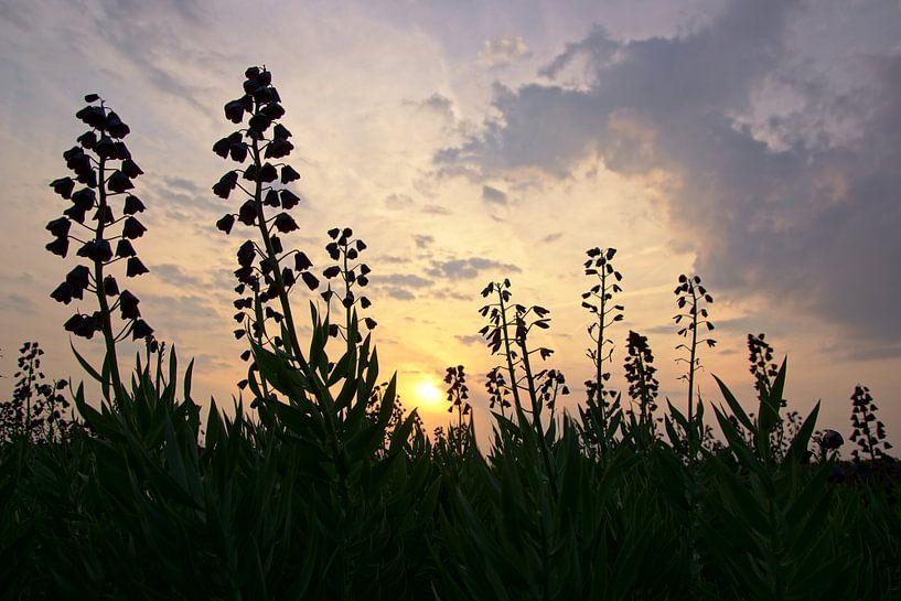 veld met bolbloemen in Norodwijk van Dirk van Egmond