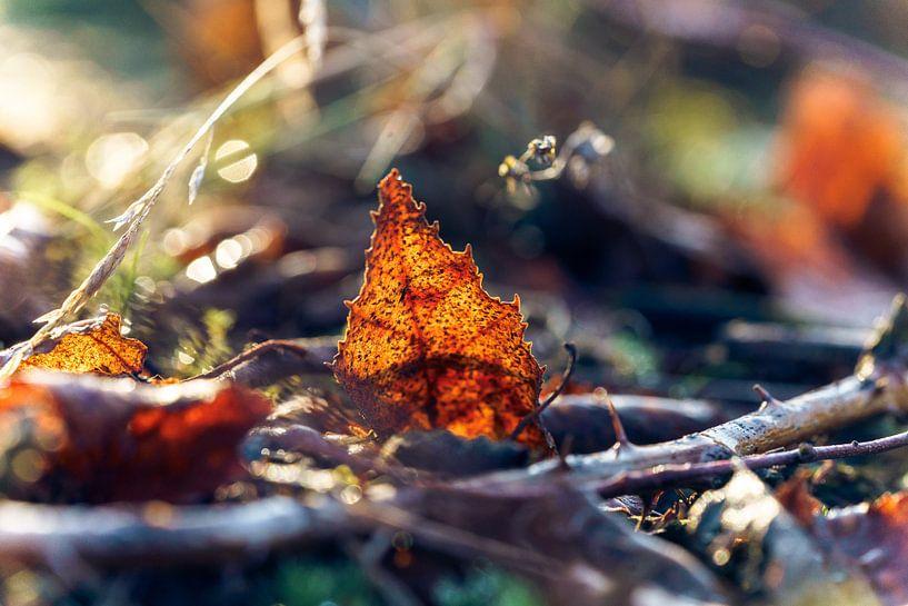 Sfeervol strijklicht op herfstblad van Fotografiecor .nl
