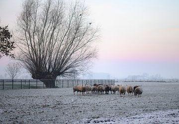 Schaf bei dem Baum von Tania Perneel
