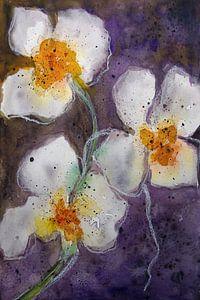 Orchidee bloem