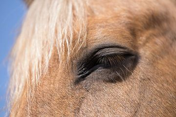 Teil des Kopfes eines Kastanienpferdes von Henk Vrieselaar