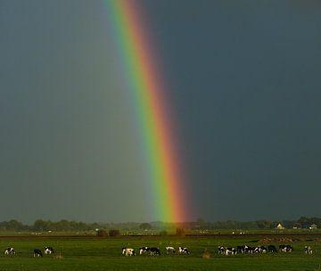 regenboog von
