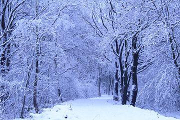 Bos in wintertijd von Stijn Dings