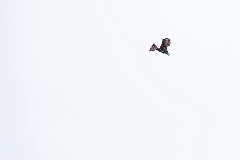 De Vleerhond. van Rebecca Gruppen