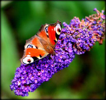 Schmetterling von Steffi Maes
