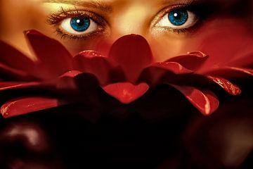 Blue eyes van