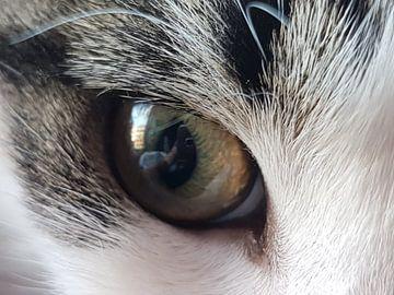 In het oog van de kat von Joelle van Buren