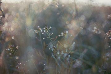 Mini-Wildblumen von Tania Perneel
