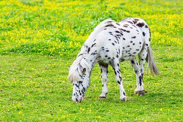 Paard schimmel met zwarte stippen graast in bloemenwei van
