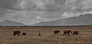 olifanten in afrika