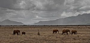 olifanten in afrika van
