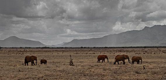 olifanten in afrika van Dennis just me