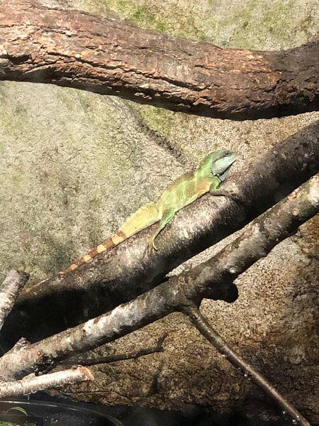 Reptil 4 von tania mol