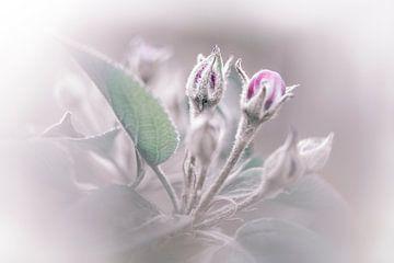 appelbloesem, lente! van Anneke Reiss