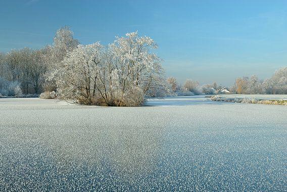 Bevroren plas met berijpte winterboom