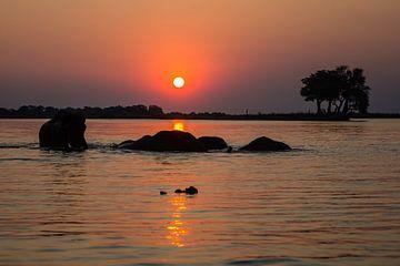Olifanten bij zonsondergang in rivier (Chobe NP) von Henri Kok
