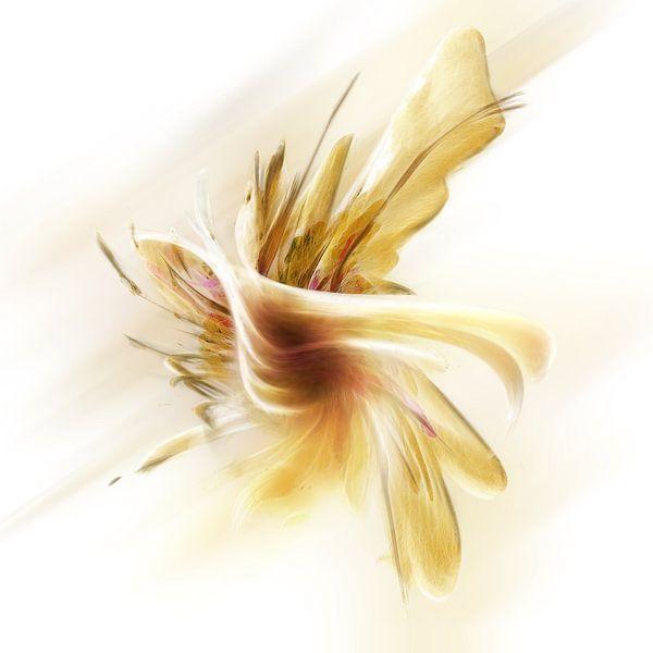 orchid fantasienemsis van Silvio Schoisswohl