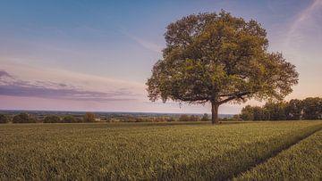 Le vieux chêne dans le champ sur Steffen Peters