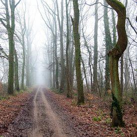 Misty way home von Werner V.M.