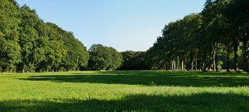 Von Wald und einer Eichenreihe umgebene Wiese von Wim vd Neut