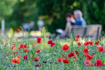 Maïspapaver in het park van de liefde van Uwe Ulrich Grün