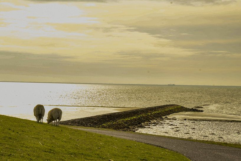Schapen aan de waddendijk van Arie Jan van Termeij