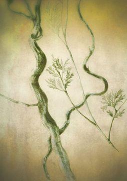 Korkenzieherweide Antik von Claudia Gründler