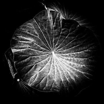 Les Jardins D'eau 6 von Esther Swaager ( Studio Toet)