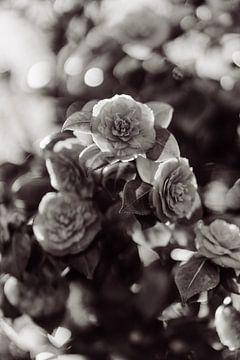 Vintage Blume von Myrthe Vlasveld