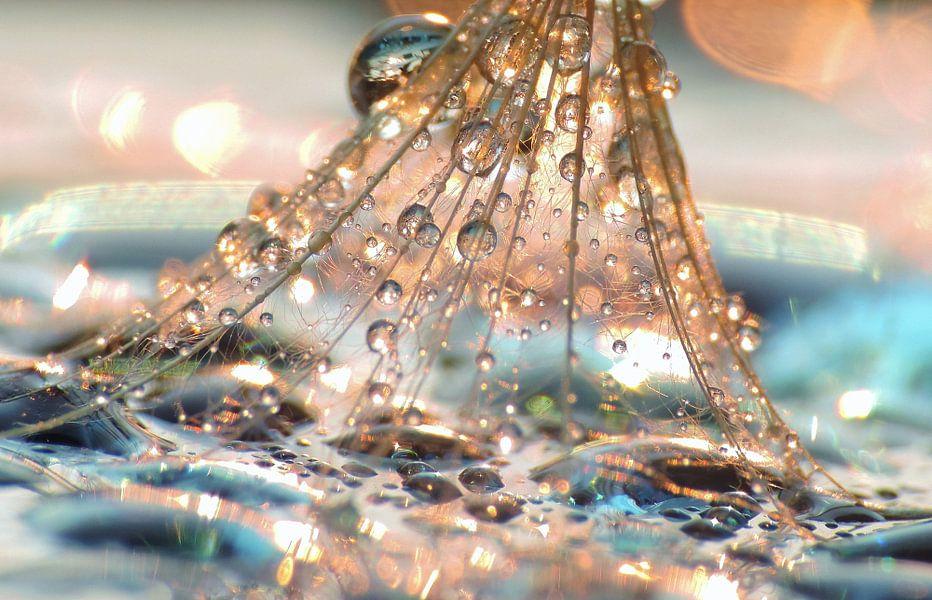 Pusteblume Chrystal Diamonds
