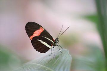 Kleurrijke vlinder op groen blad van Kim de Been