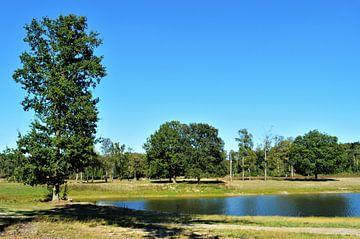 Zonovergoten Bosgebied van DoDiLa Foto's