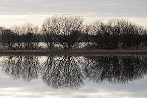 Bomensilhouet gespiegeld in het water van