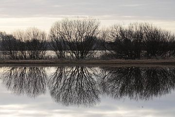 Bomensilhouet gespiegeld in het water van Robert Wagter