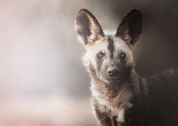 Afrikanischer Wildhund Porträt von Melanie Delamare