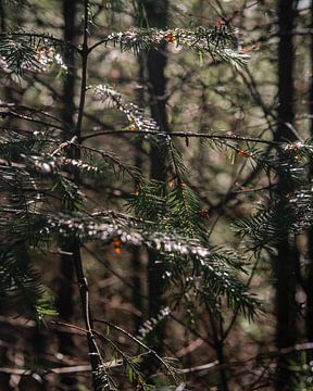 Kiefernzweige mit orangefarbenen Details von Laura-anne Grimbergen