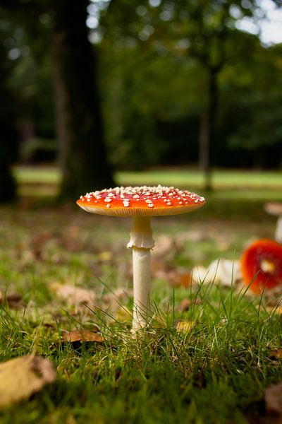 Vliegenzwam in het bos van Fotografiecor .nl